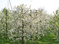 Natur_im_alten_land_P4223718