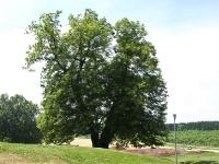 Burg-Scharfenstein_P6300168-(37)