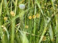 Insel Rügen_Gras mit Tau_AA210975
