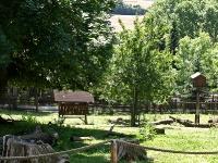 baerenpark_worbis_AA273281