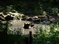 baerenpark_worbis_AA273441
