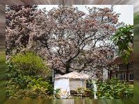 magnolie_mfw13__017655R