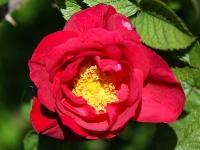 rose_mfw13__022463
