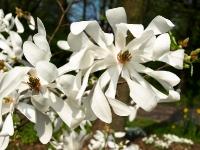 weisser Rhododendron_4157864