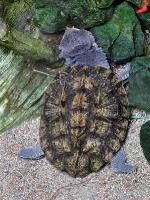tropen-aquarium-hagenbeck_mfw13__015023