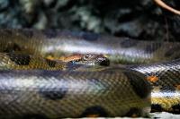 tropen-aquarium-hagenbeck_mfw13__015059