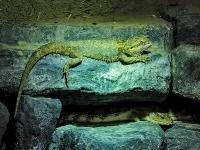tropen-aquarium-hagenbeck_mfw13__015180