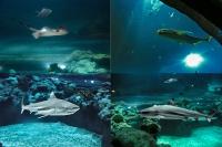 tropen-aquarium-hagenbeck_mfw13__015216coll