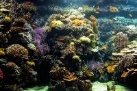 tropen-aquarium-hagenbeck_mfw13__015267