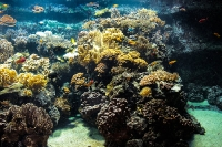 tropen-aquarium-hagenbeck_mfw13__015273