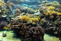 tropen-aquarium-hagenbeck_mfw13__015275