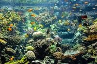 tropen-aquarium-hagenbeck_mfw13__015286