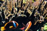tropen-aquarium-hagenbeck_mfw13__015289coll