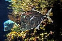 tropen-aquarium-hagenbeck_mfw13__015329