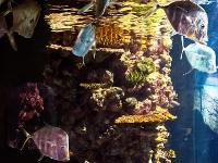 tropen-aquarium-hagenbeck_mfw13__015333
