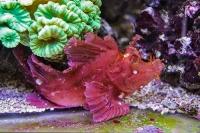 tropen-aquarium-hagenbeck_mfw13__015342