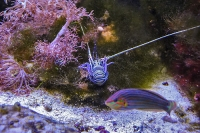 tropen-aquarium-hagenbeck_mfw13__015344
