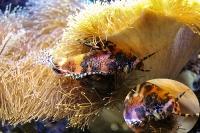 tropen-aquarium-hagenbeck_mfw13__015353