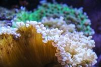 tropen-aquarium-hagenbeck_mfw13__015373