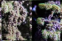 tropen-aquarium-hagenbeck_mfw13__015376coll