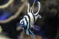 tropen-aquarium-hagenbeck_mfw13__015378