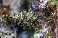 tropen-aquarium-hagenbeck_mfw13__015383
