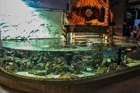 tropen-aquarium-hagenbeck_mfw13__015385