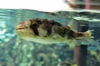 tropen-aquarium-hagenbeck_mfw13__015395