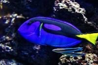 tropen-aquarium-hagenbeck_mfw13__015421