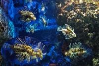 tropen-aquarium-hagenbeck_mfw13__015446coll