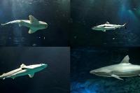 tropen-aquarium-hagenbeck_mfw13__015460coll