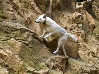 polarwolf_A031005