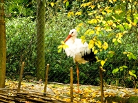 storch_A030835