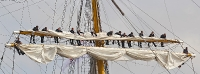 gorch-fock-segel_mfw13__018202_stitch